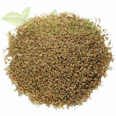 Насіння пшениці в еко упаковці