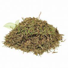 Спориш, трава 50 гр.