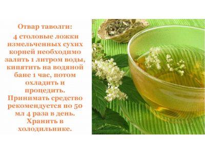 Таволга вязолистна - природний аспірин