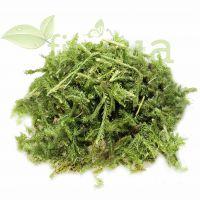 Плаун трава, 50 гр.