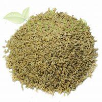 Ячмінь зерно (насіння ячменю), 250 гр.