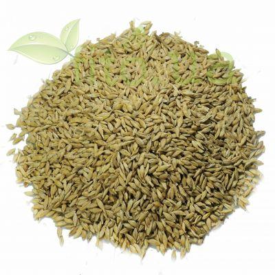 Зерна ячменю в еко упаковці