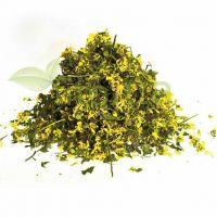 Зеленчук жовтий трава (Яснотка жовта, Galeobdolon luteum Huds)