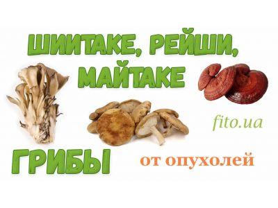 Аптека грибів