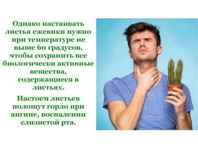Ожина від кашлю та застуди