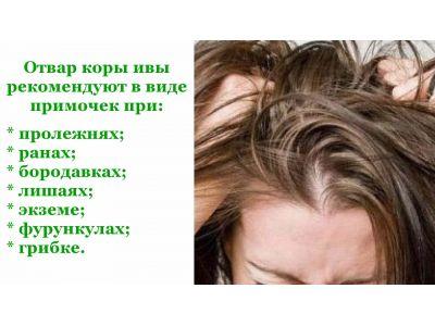 Кора верби від похмілля і головного болю