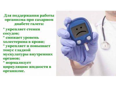 Козлятник (Галега) - при цукровому діабеті