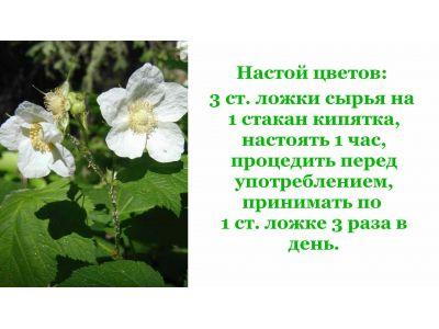 Листя малини від кашлю