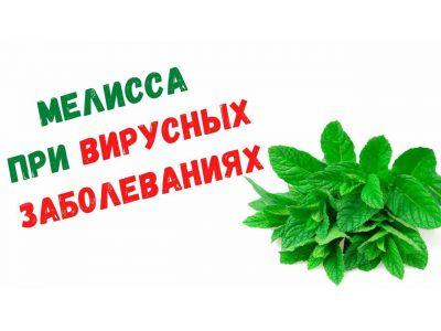 Меліса властивості і протипоказання при вірусних захворюваннях