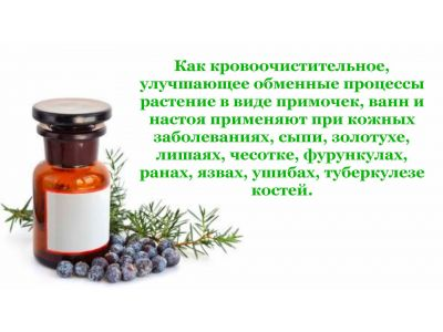 Ялівець властивості при циститі та інших хвороб