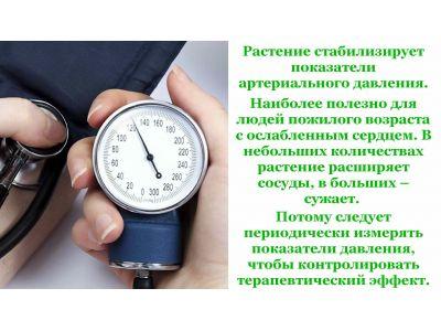 Грицики лікувальні властивості при гіпертонії