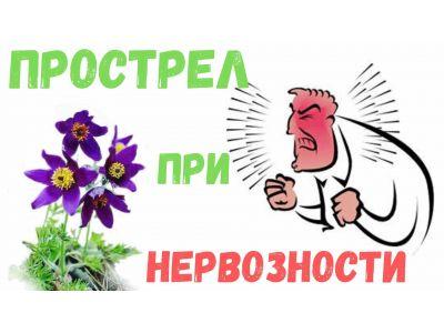Простріл або Сон-трава при нервозності