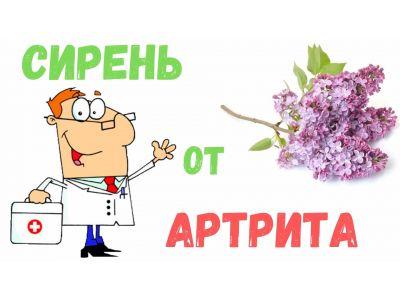 Властивості бузку від артриту та інших захворювань