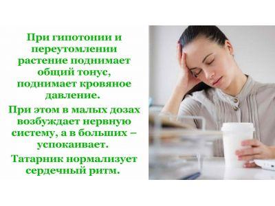 Татарник властивості при гіпотонії та інших хвороб