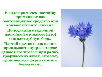 Волошка квітка при циститі