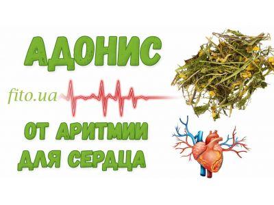 Горицвіт весняний від аритмії для серця