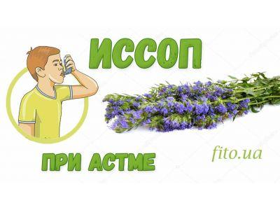 Иссоп при астмі