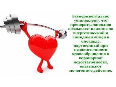 Конвалія лікувальні властивості для серця і серцево-судинної системи
