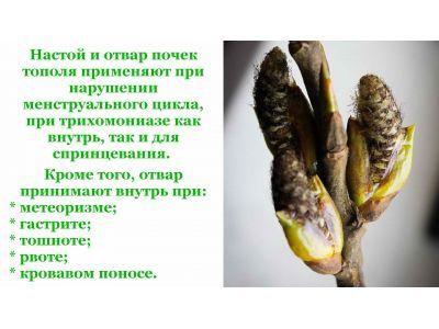 Бруньки чорної тополі для суглобів і при інших недугах
