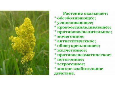 Трава подмаренник при псоріазі