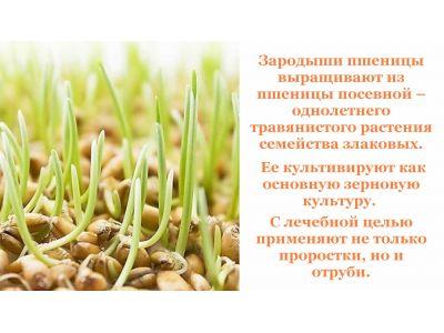 """Зародки пшениці - """"Їжа богів"""""""