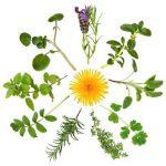 Натуральні трави і рослини в сухому вигляді в магазині Фіто