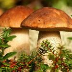 Сухі гриби