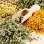 Сухі трави лікарських рослин