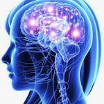 Для нервової системи - Фіто магазин